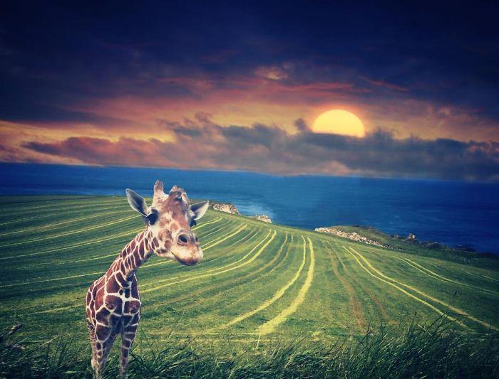В гостях у жирафа. Автор фото: Мелисса Винсент (Melissa Vincent).