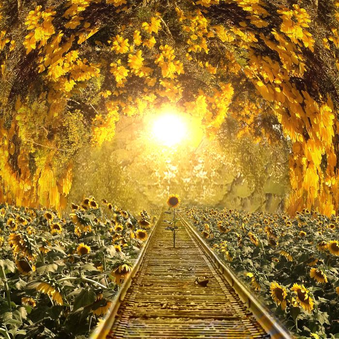 Подсолнечный тоннель. Автор фото: Мелисса Винсент (Melissa Vincent).
