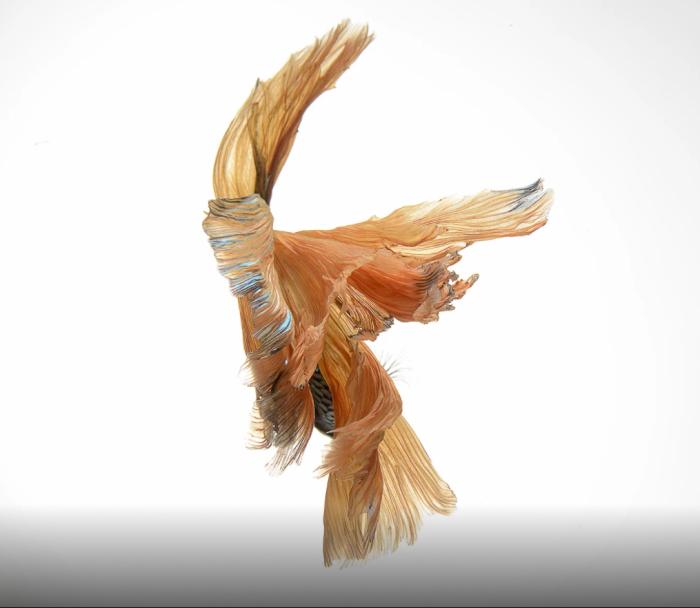Жёлтая птица. Автор: Visarute Angkatavanich.