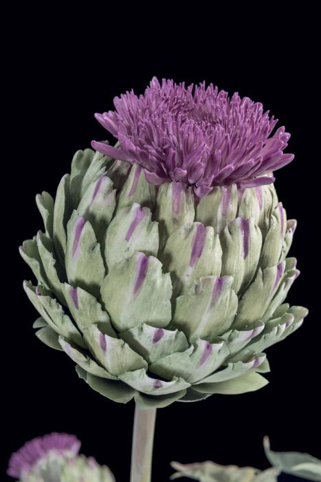 Ненавистные фарфровые цветы, которые разошлись по миру, принеся славу и успех своему создателю. Автор: Владимир Каневский.
