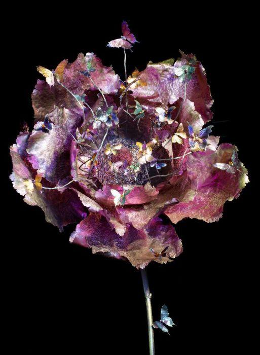 Роза. Автор: Wallace Chan.