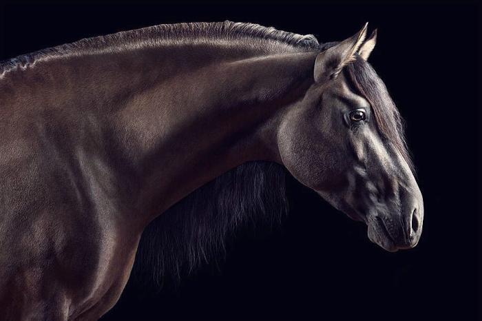 А ещё совсем недавно Вибке выпустила свою третью книгу, посвящённую фотографиям лошадей.
