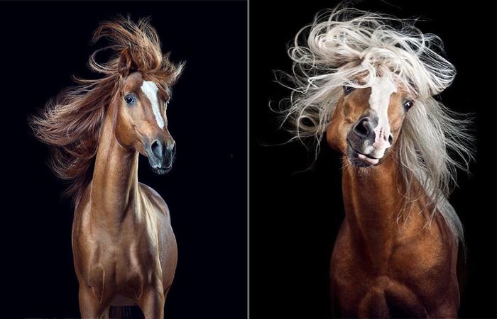 Гривастые модники: Эмоциональные портреты лошадей, которые решили покрасоваться перед камерой