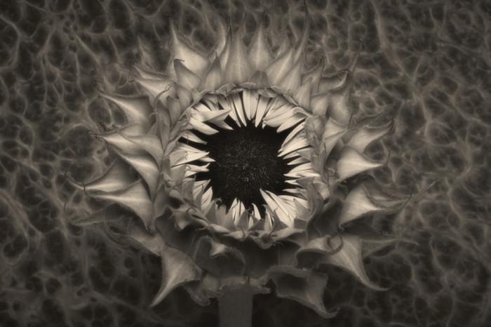 Искусство чёрно-белого натюрморта. Фотохудожник Вильям Кастеллана (William Castellana).
