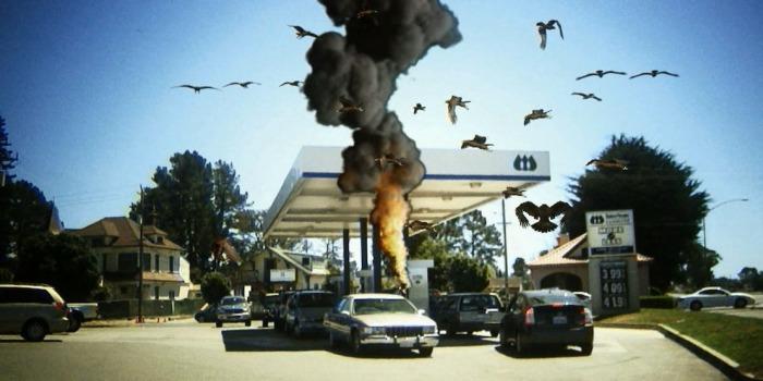 Птицекалипсис: Шок и Трепет.