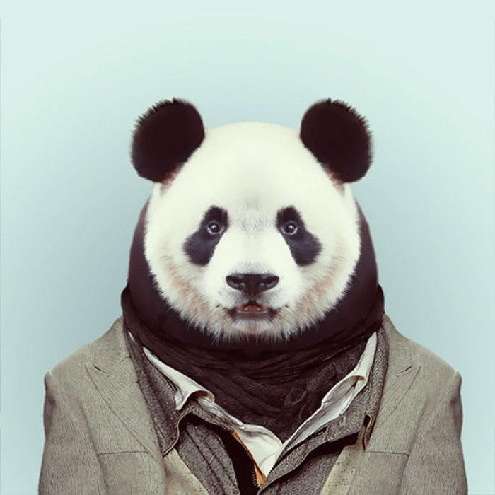 Панда. Автор: Yago Partal.