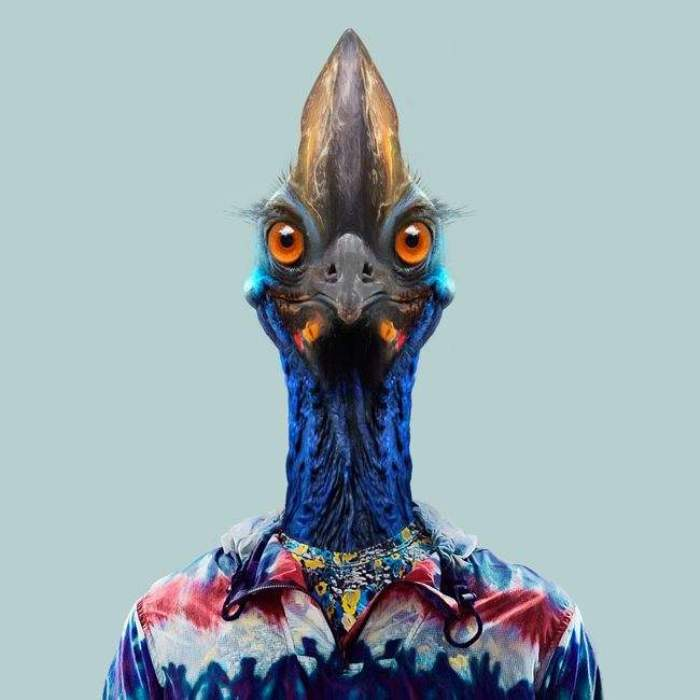 Южный казуар. Автор: Yago Partal.