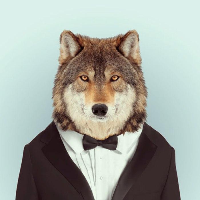 Волк.  Автор: Yago Partal.