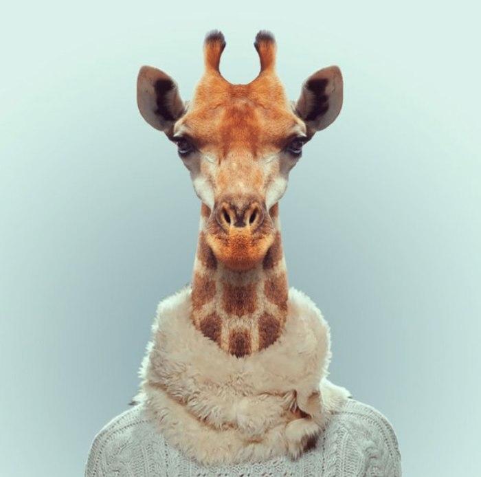 Жираф.  Автор: Yago Partal.