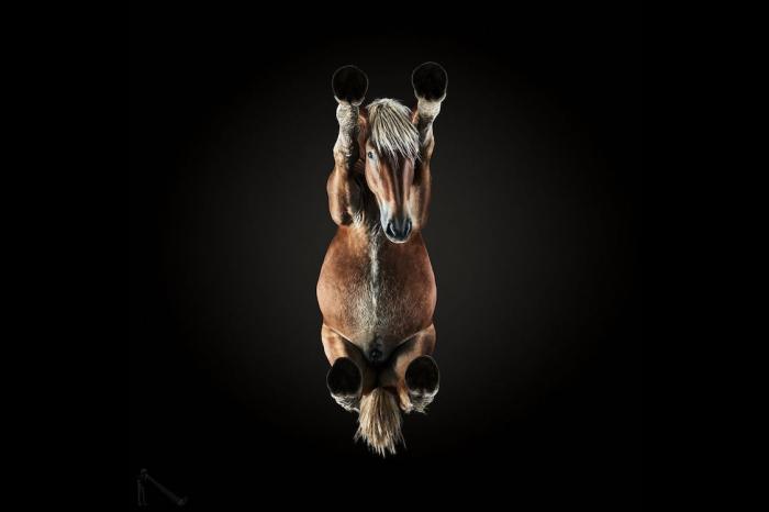 Вид лошади снизу. Автор: Andrius Burba.