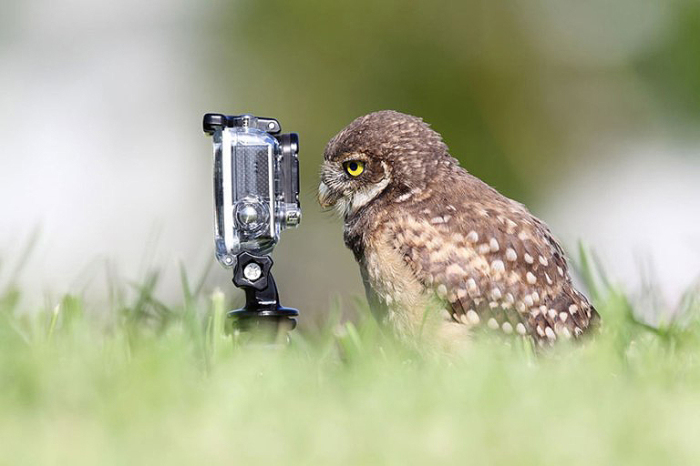 15 забавных фото животных с камерами