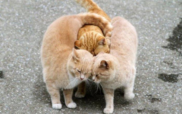 Семейство котов.