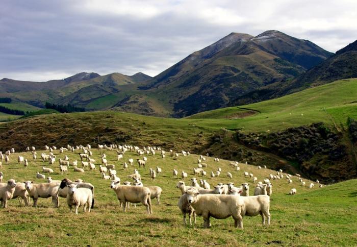 Природные просторы. Новая Зеландия.