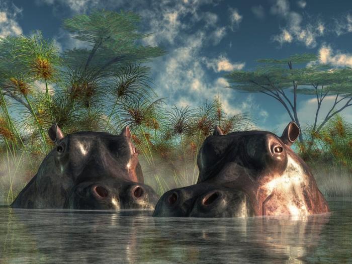 Бегемоты.