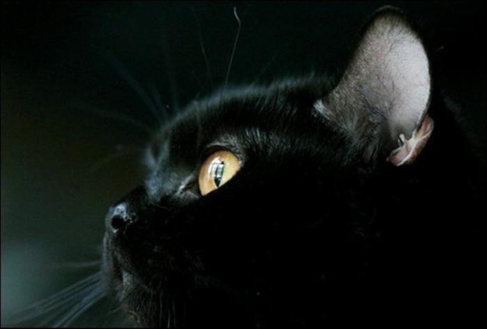 Кот чернее ночи.