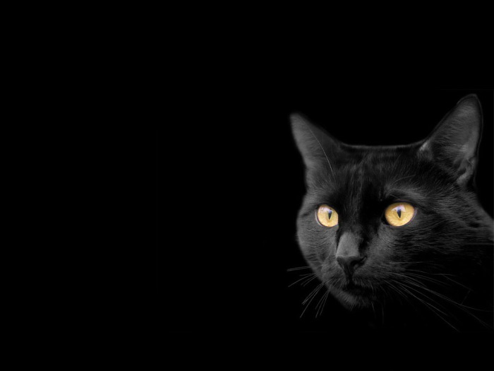 Жизнь без кошек была бы скучна и безрадостна.