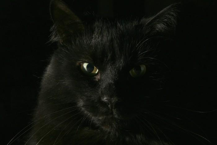 Черный пречерный кот.