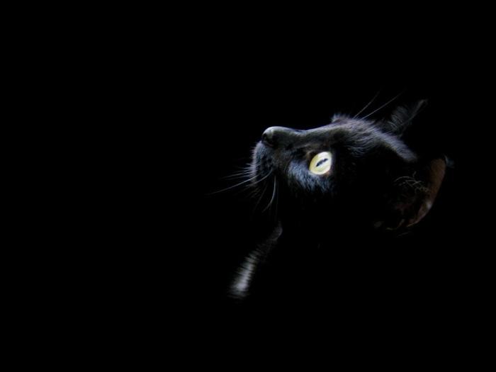 Черный котенок.