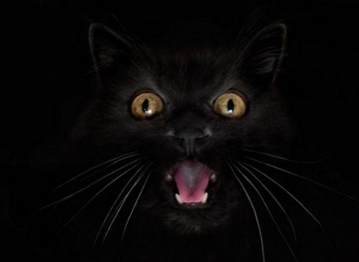 Желтоглазый кот.