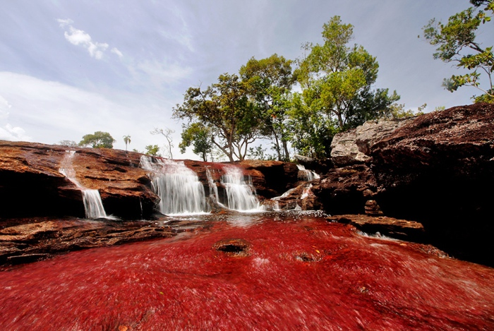 Пятицветные воды в Каньоне Кристалес в национальном парке Макарена в Колумбии.  Автор фото: Jose Miguel Gomez.
