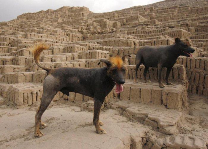 Достояние и гордость Перу. \ Фото: ridus.ru.