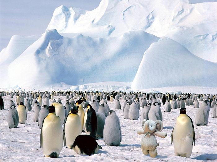 И даже заглянуть в Антарктику.