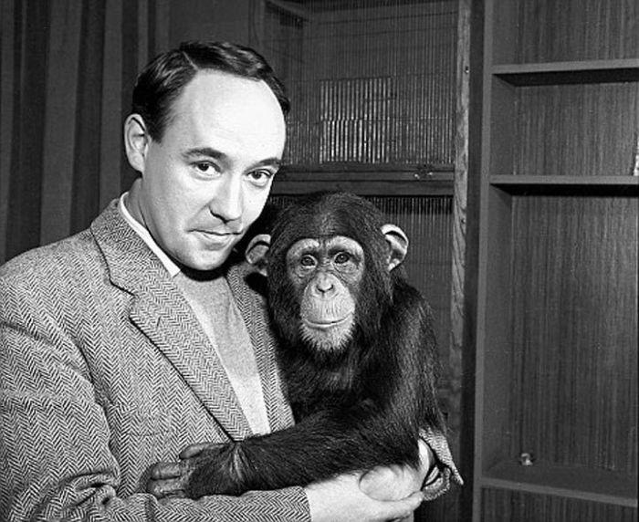 Дезмонд и его шимпанзе. \ Фото: google.com.