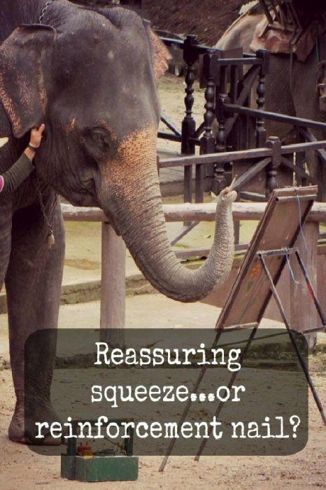 Махаут дёргает слона за ухо. \ Фото: pinterest.ie.