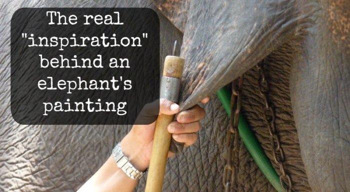Хитрая уловка, чтобы заставить слона рисовать. \ Фото: twitter.com.