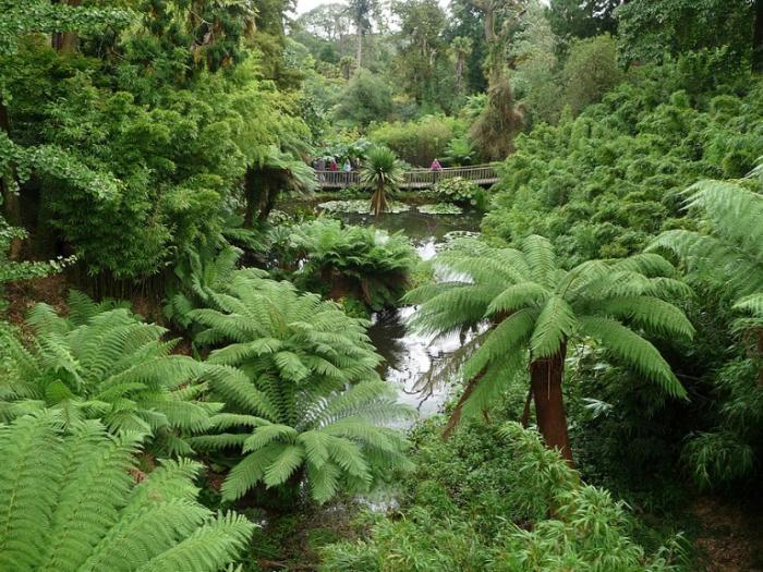 Затерянные сады Хелигана в Корнуолле.