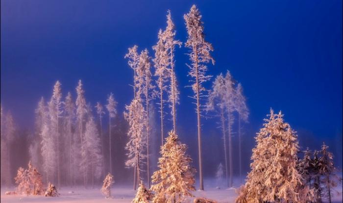 Волшебный лес. Россия.