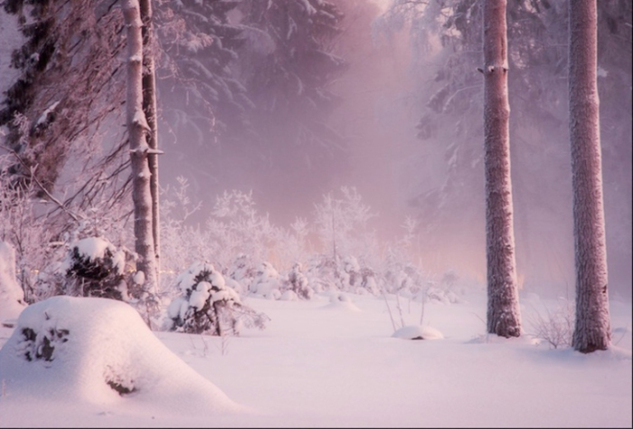 Лес погружающийся в сумерки.