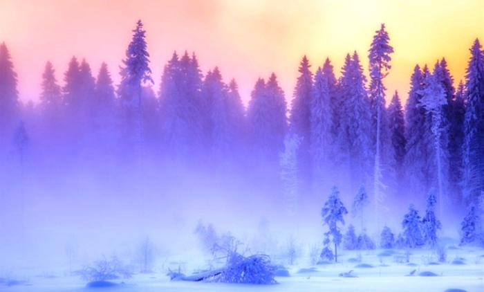 Невероятно нежные тона и оттенки зимнего леса.
