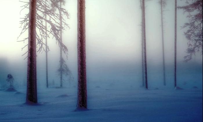 Драматический образ леса.