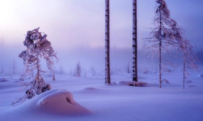 Тишина. Безмолвный лес. Россия.