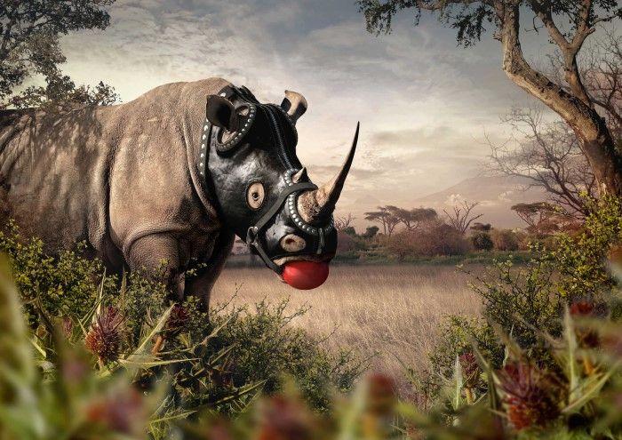Прикольный носорог картинка
