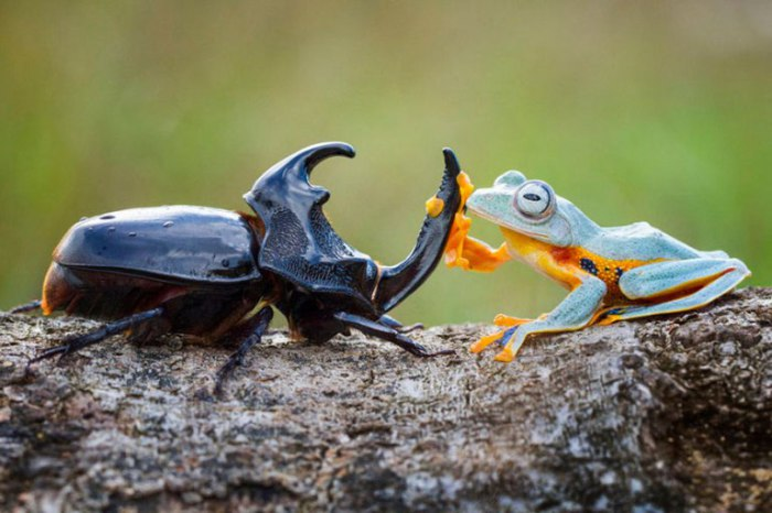 Приключения древесной лягушки и рогатого жука. Hendy Mp.