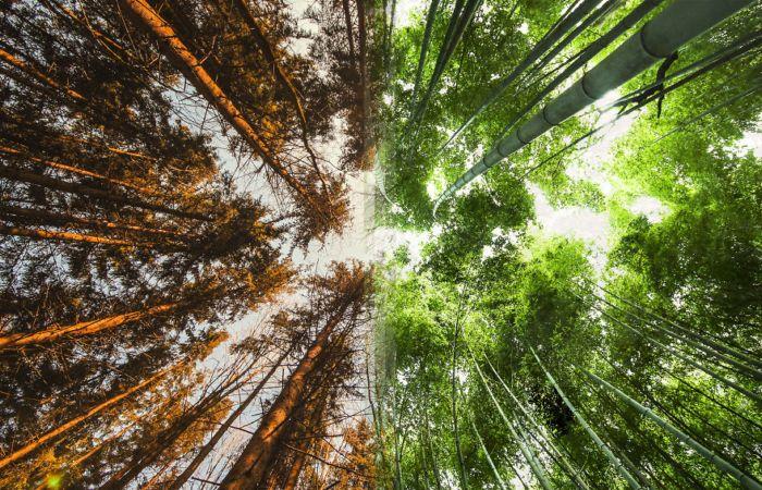 Лес в Норвегии и лес в Японии.