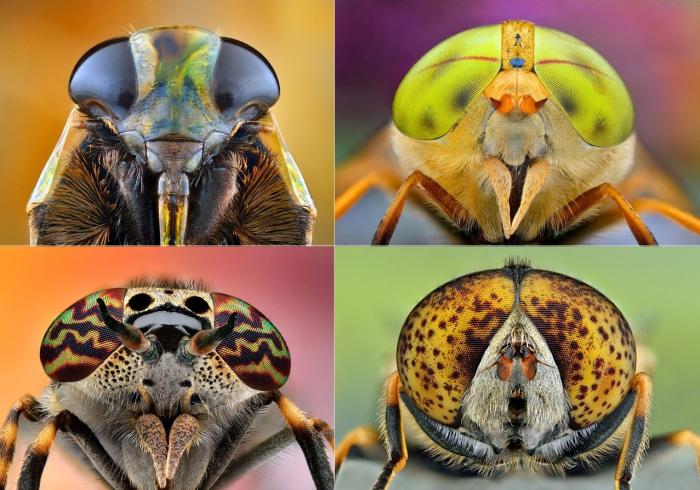 Удивительные макропортреты насекомых.