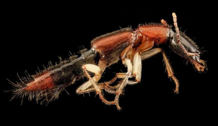 Захватывающий макромир насекомых в