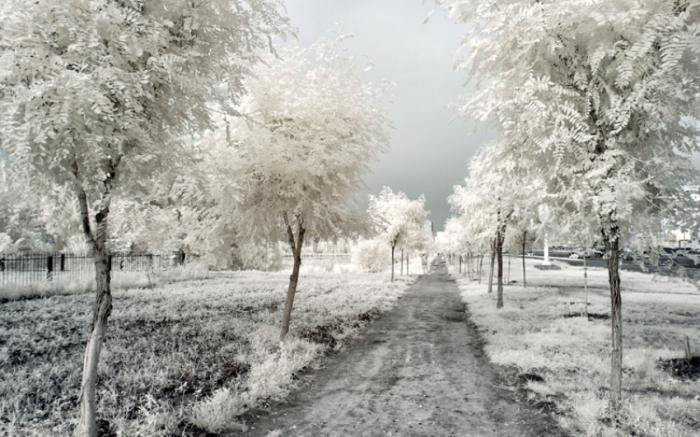 Зима среди лета. Инфракрасная съемка от Олега Стельмах.