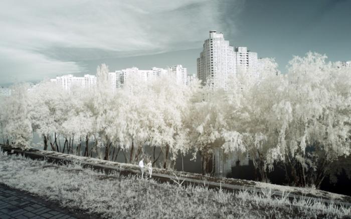 Высотка притаившаяся за кронами деревьев.