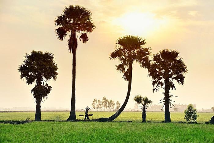 Пальмы. Автор: Ly Hoang Long.