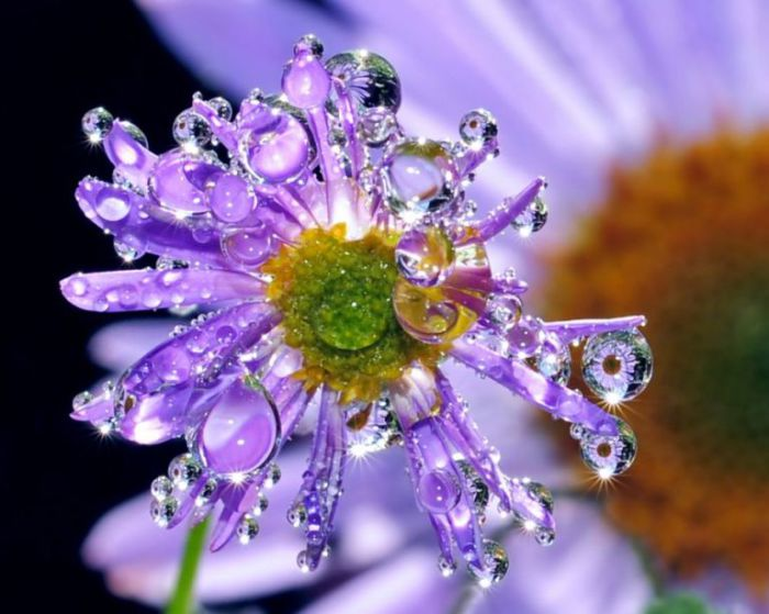 Жемчужный цветок. Steve Wall.