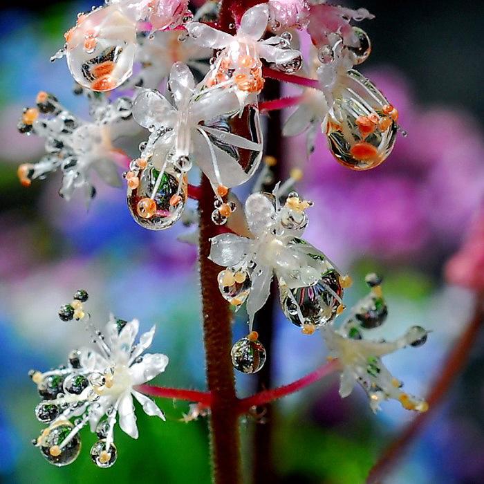 Волшебные цветы.