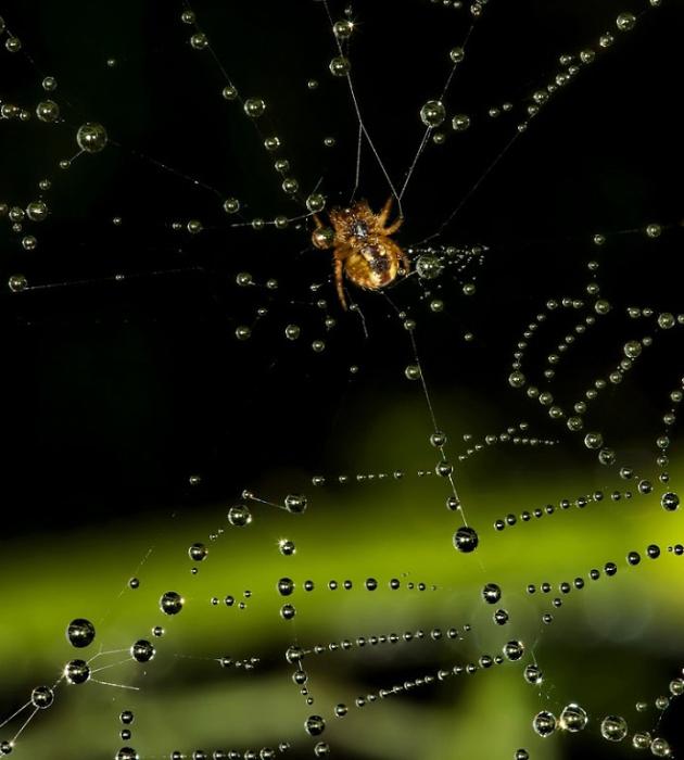 Золотой паук и бриллиантовая паутина.