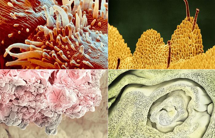 Микромир. Мир еды и растений под микроскопом.