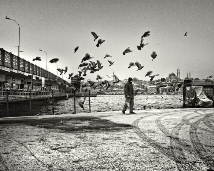 Люди и птицы.