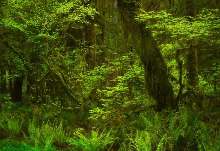 Олимпийский Национальный парк, Вашингтон. Фото: Green Mountain Photographic Workshops.