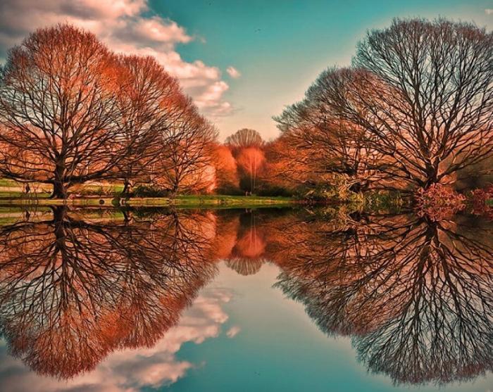 Деревья-близнецы.